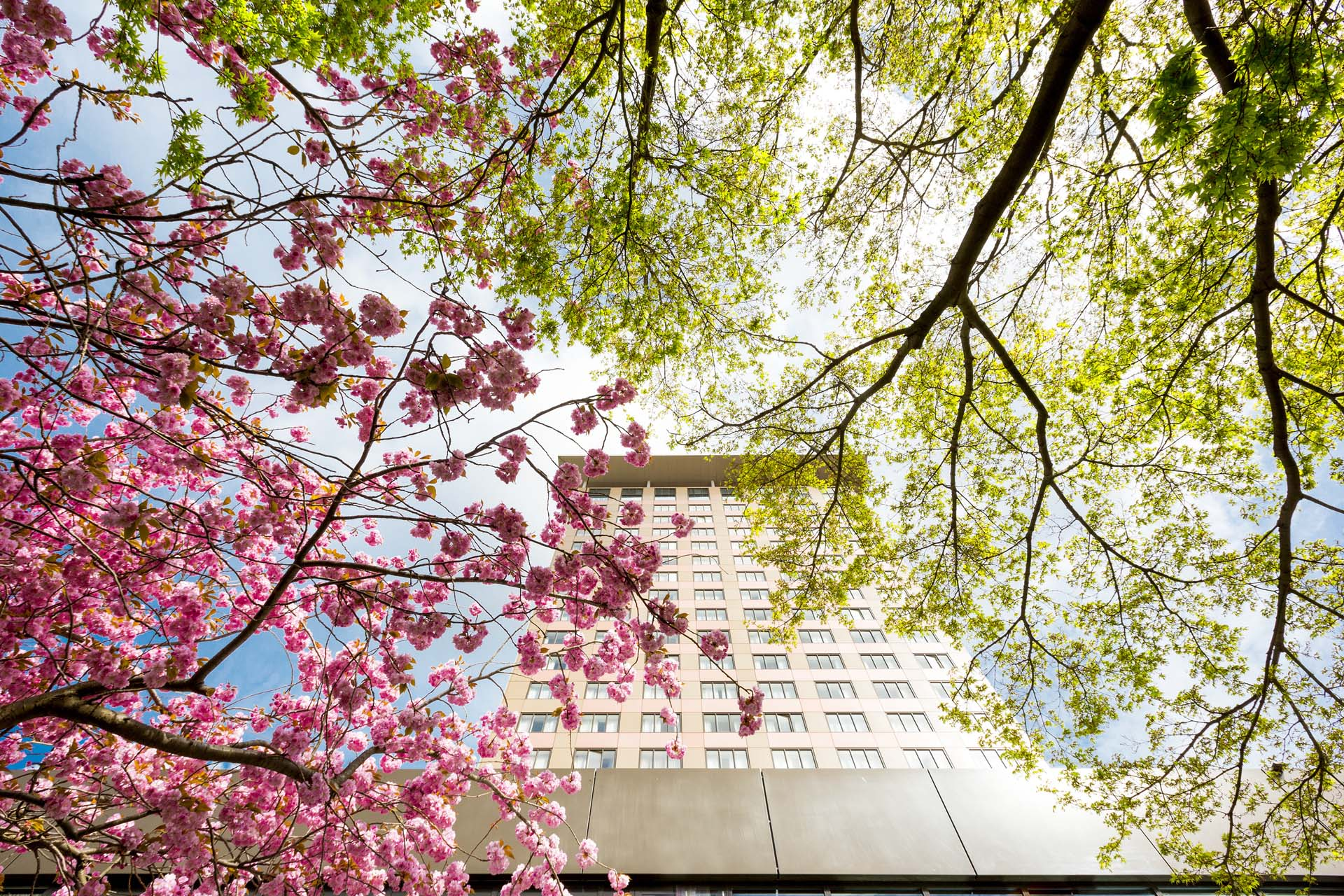 Sakura at Hotel Okura Amsterdam