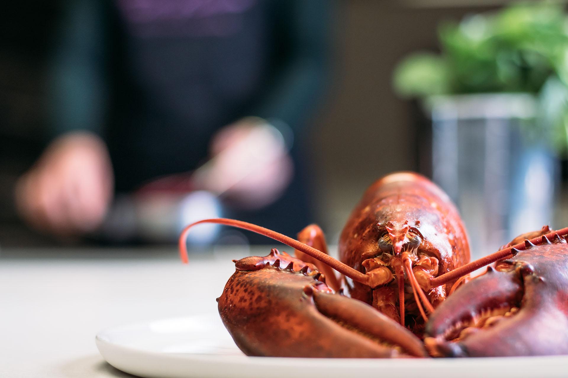 Lobster Taste of Okura
